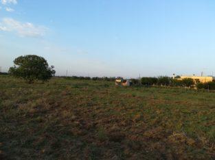 Terreno agricolo in località Mangani